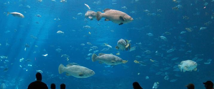 анталья аквариум