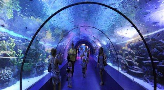 экскурсия аквариум из кемера